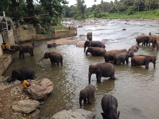 Pinnawala, Sri Lanka: Water time continues