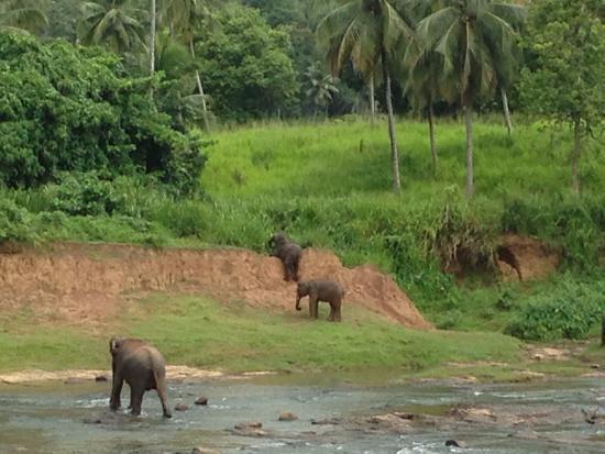 Pinnawala, Sri Lanka: Failed attempt to climb the river bank