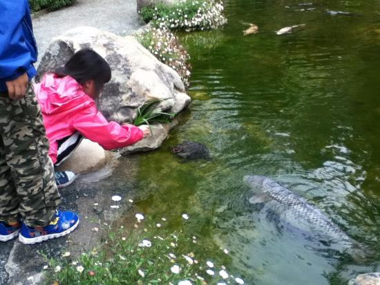 Saratoga, CA: Painted turtles attract the children.