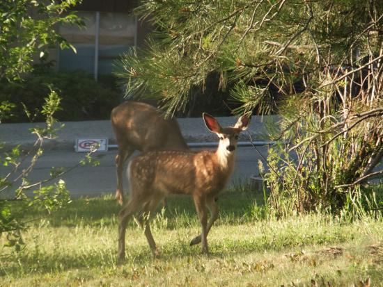 Cranbrook, كندا: More Visitors to the B&B