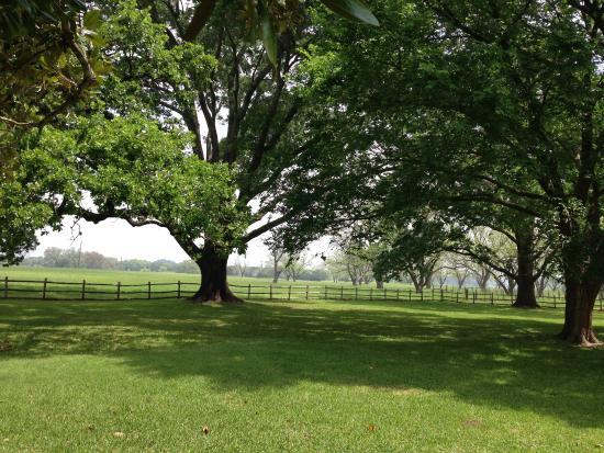 จอห์นสันซิตี, เท็กซัส: Beautiful country