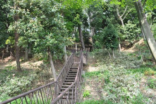 Setagaya, اليابان: 上野毛自然公園/階段を上がると桜の広場に行けます