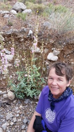Springdale, UT: A Rare Sighting of Mr Palmer's Penstemon