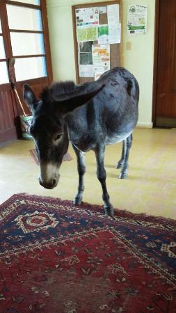 Greyton, Sudáfrica: We have all sorts of guests visiting