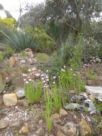 South Australia, Australien: yet more flowers