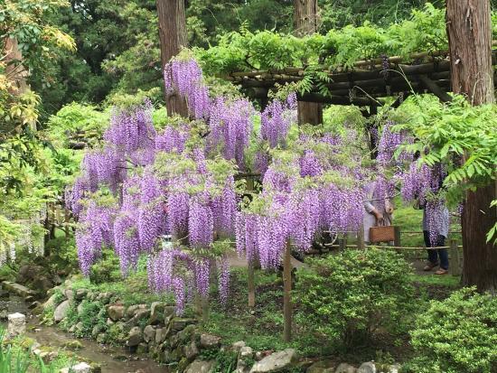 Manyo Botanical Garden - Picture of Manyo Botanical Garden, Nara - TripAdvisor