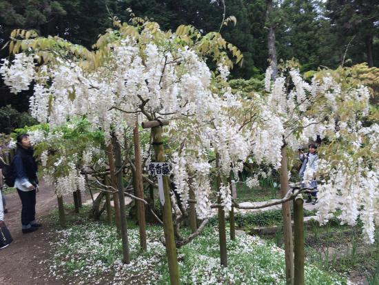 Manyo Botanical Garden-1 - Foto de Manyo Botanical Garden, Nara - TripAdvisor