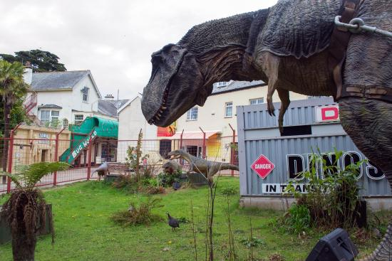 Ilfracombe, UK: What a magical day at Combe Martin Wildlife and Dinosaur park.