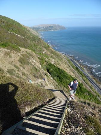 Paekakariki, Neuseeland: Looking down and back... it's an achievement.