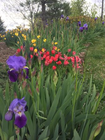 BEST WESTERN PLUS High Country Inn: Beautiful flowers in the park behind the hotel