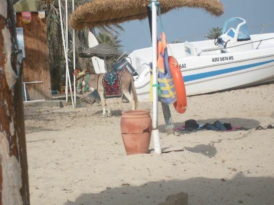 Club Jumbo Djerba : photo1.jpg