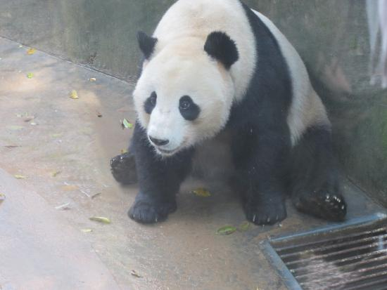 Fuzhou, China: Zoo in the park
