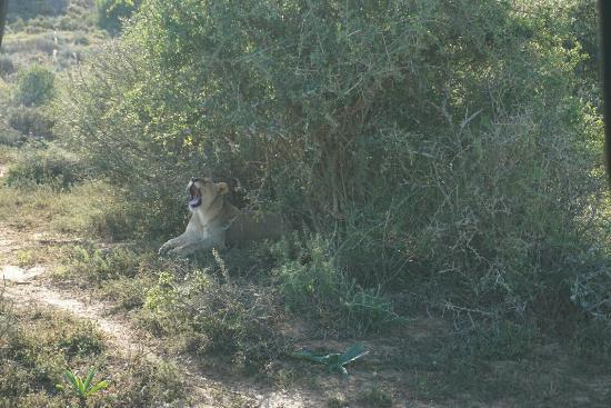 Grahamstown, Republika Południowej Afryki: DSC00864_large.jpg