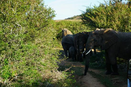 Grahamstown, Republika Południowej Afryki: DSC00897_large.jpg