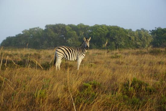 Grahamstown, Republika Południowej Afryki: DSC00804_large.jpg