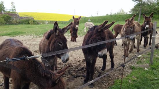 Indre-et-Loire, Francia: Accueil des ânes