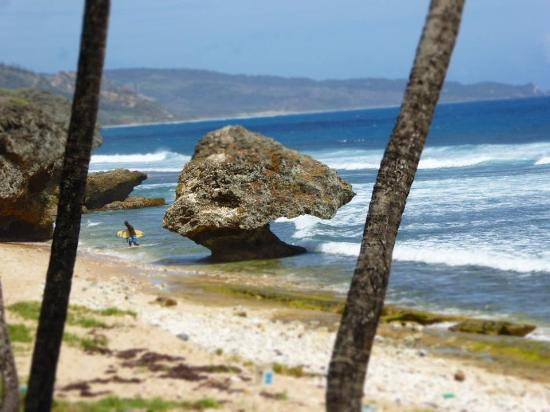 Sea-U Guest House: Bathsheba Beach, where you can locate the natural pools during low tide