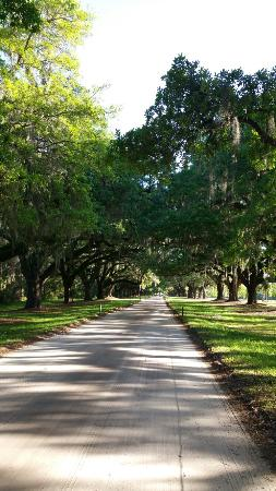 Mount Pleasant, Южная Каролина: Driveway is gorgeous