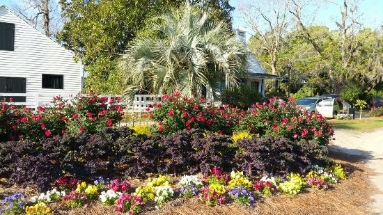 Mount Pleasant, SC: Driveway is gorgeous