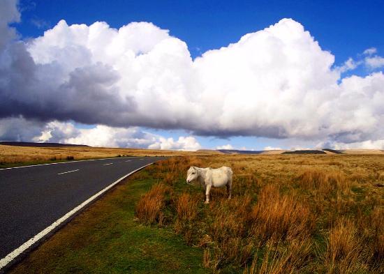 Roam Wales