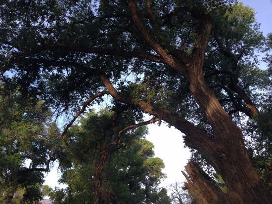 Cottonwood, Аризона: The Canopy trail, off Owl Road