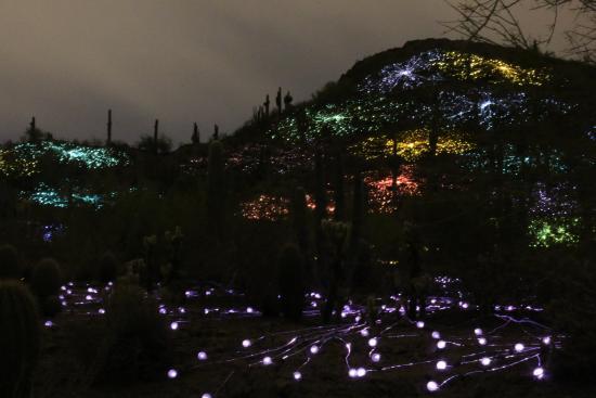 Desert Botanical Garden Lights And Hillside
