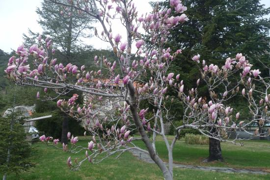 Pedoulas, Chipre: Неизвестное растение
