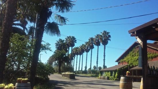 Sebastopol, Califórnia: View of driveway leading to winery