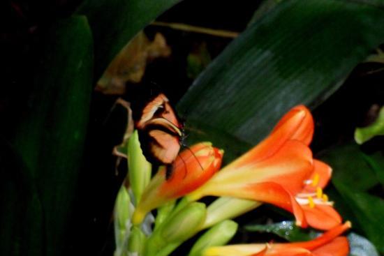 Leidschendam, هولندا: Vlinder op bloem