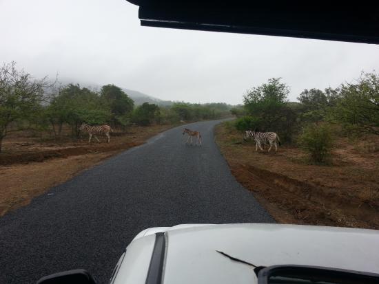 Зулуленд, Южная Африка: Landschaft mit Tieren