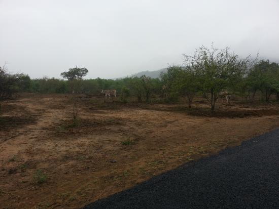 Zululand, Sudáfrica: Landschaft im Prk