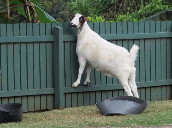 Maleny, Australie : photo3.jpg