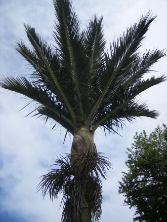 Nikau Lodge: Our Nikau Palm