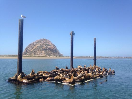 Sub Sea Tours and Kayaks
