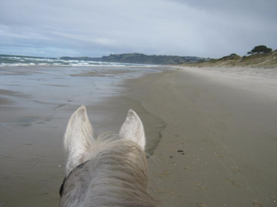 Pakiri Beach Horse Rides - Day Tours: long stretches of beach and not a person in sight