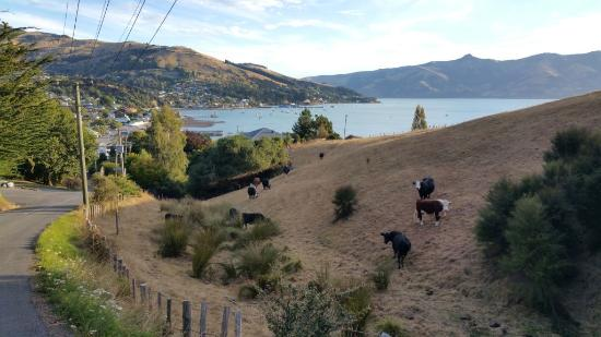 Akaroa TOP 10 Holiday Park: View overlooking Akaroa harbour