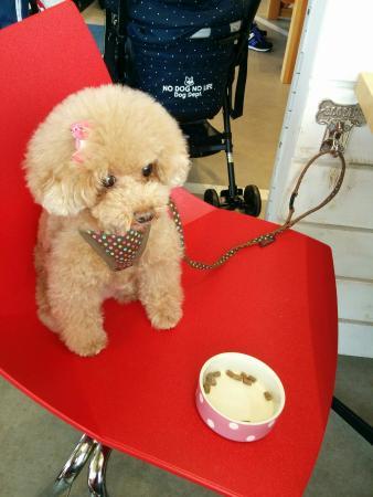 Dog Dept + Cafe Karuizawa Prince