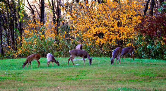 Panther Creek State Park: Deer in fall