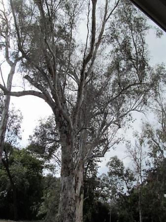 Bilde fra Arcadia