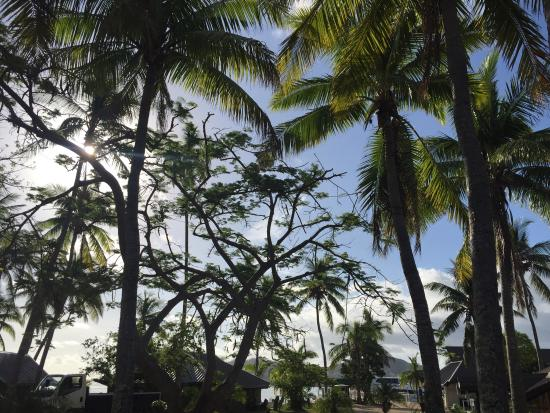 Plantation Island Resort: photo1.jpg