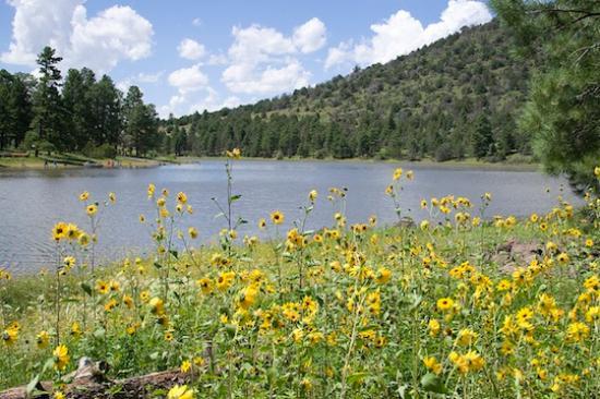 Jacob Lake, AZ: 케이밥 국립 휴양림(Kaibab National Forest)