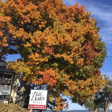Tui Oaks Motor Inn: Autumn in Taupo
