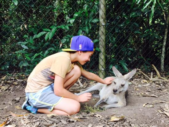 Palm Cove, Australia: My son with very friendly kangaroo!!