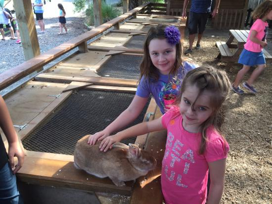 Warkworth, Новая Зеландия: kids able to pat and play with the animals
