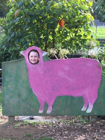Warkworth, Nueva Zelanda: sheep world photo shoot