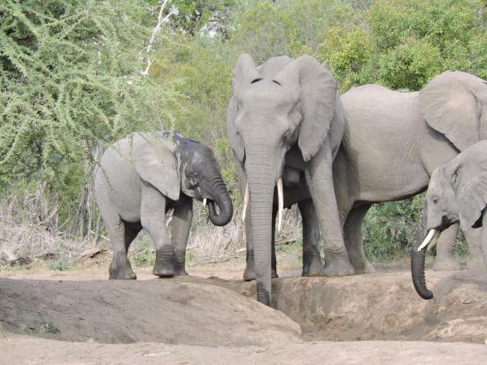 Foto de Klaserie Private Game Reserve