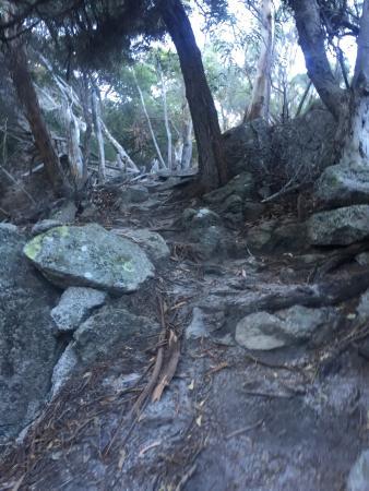Flinders Island, Australien: photo5.jpg