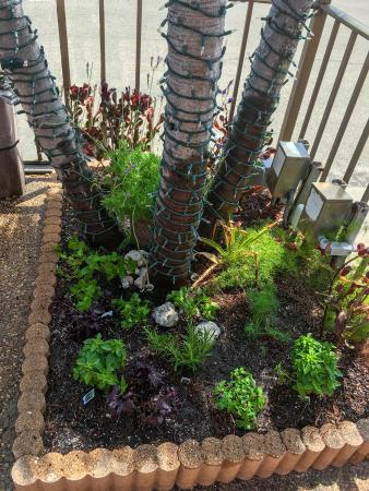 Sea Cliff Resort: Guests Herb Garden