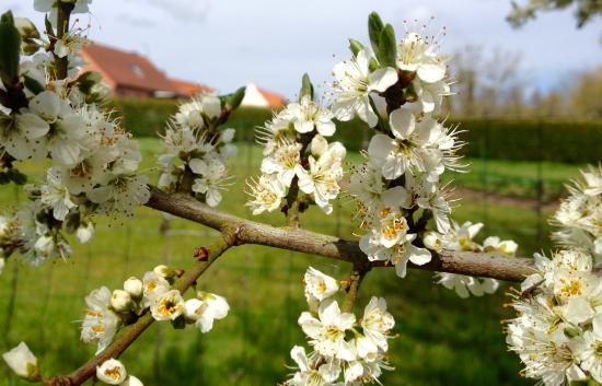 Inxent, Francia: Le printemps dans le jardin