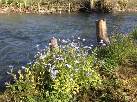 Inxent, Francia: Au fond du jardin